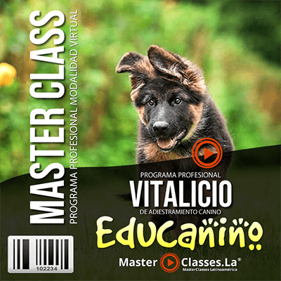 programa educanino by Reverso Academy master classes cursos online